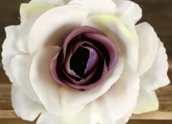 Ruža vencová rozvitá  JX1636-A15